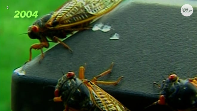 Hear that?  Billions from 2004's cicada horde are coming back to towns in numerous states