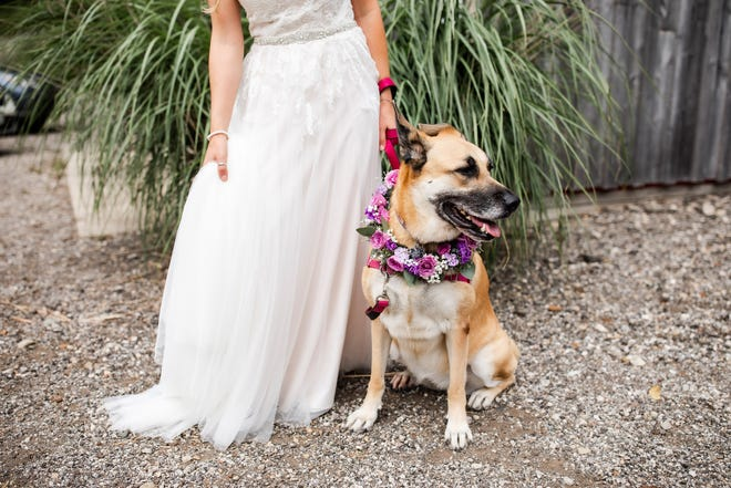 Forget man's best friend; a bride needs her furry pal by her side on her big day!