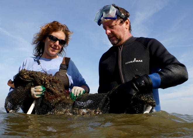 Leslie Sturmer (left) and Reggie Markham (right) harvest a bag of Sunray Venus clams just offshore of Cedar Key.
