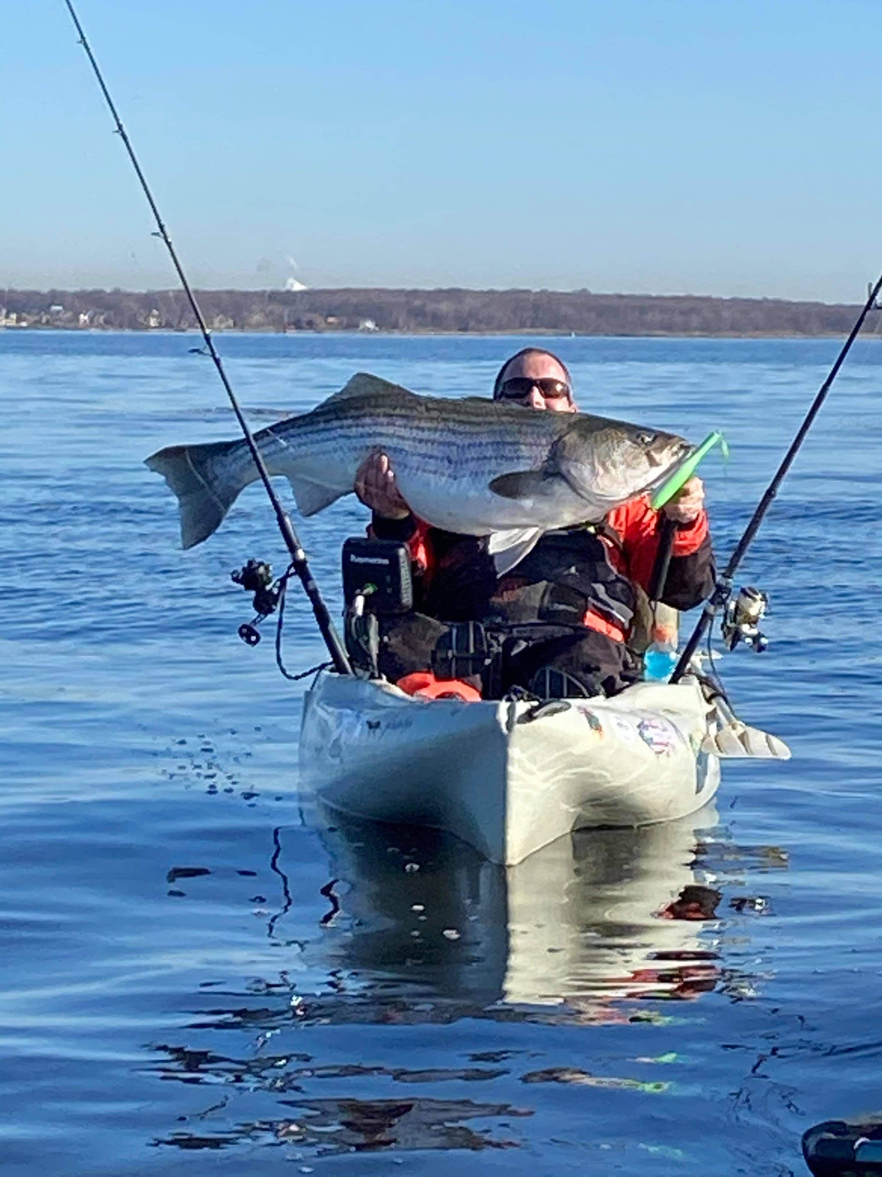 58 pound striped bass release on Raritan Bay