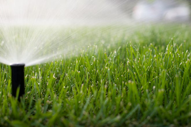 Learn how to water your lawn the right way.