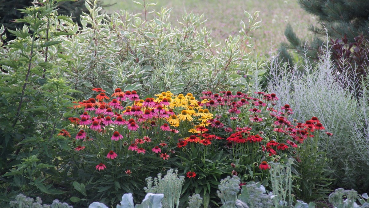 Gardening | Attracting birds to the landscape has many benefits