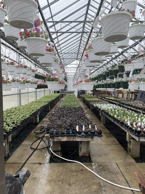 Flower bedding plants will be featured during sales by the Future Farmers of America chapter at Dundee High School. The sales will kick off May 1.