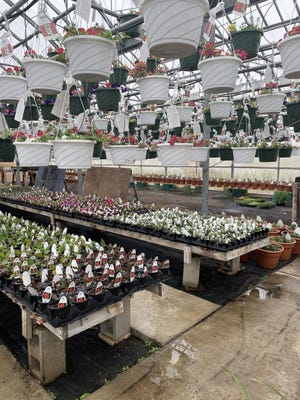 Students in the Dundee High School FFA will sell flowering pots and bedding plants again this spring starting May 1. The greenhouse is located behind the high school at Ypsilanti St. and Viking Dr.