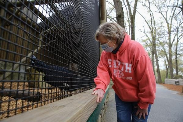Betsey Brewer, co-owner at Southwick's Zoo in Mendon, said it costs about $300,000 a month to run the zoo, including care for its 850 or so animals. Here she visits with a Western Crowned Pigeon last spring.