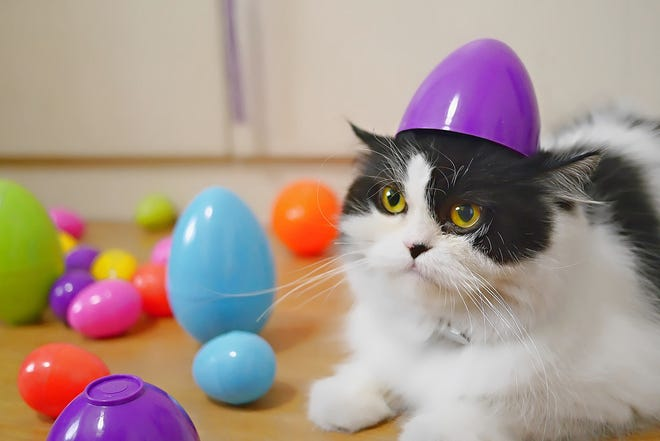 Although your pet may not be able to participate in all the Easter festivities, they can still take part in this holiday with a few adjustments.