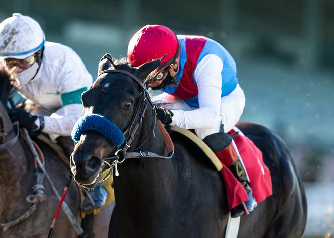 Medina Spirit and jockey Abel Cedillo win the Grade III, $100,000 Robert B. Lewis Stakes, Saturday, January 30, 2021 at Santa Anita Park, Arcadia CA.© BENOIT PHOTO
