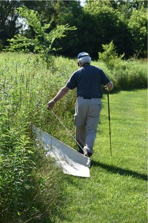 "Friends of the St. Clair River volunteer Don Rice searches for ticks with a ""tick drag"" in St. Clair County in 2019."