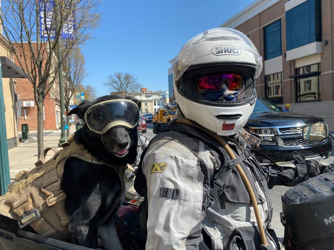 Surak, a shepherd-mix rescue dog, looked right at home on the back of Scott Canto's motorcycle. The pair, along with Odessa Winter, were spotted near Memorial Square in Chambersburg Monday morning looking for coffee and food after a weekend of camping. They live in the Washington, D.C., area, but go out camping and riding dirt trails every chance they get and enjoy the Michaux and Tuscarora state forests in this area. For more on Surak's adventures, see @surak_the_dog
