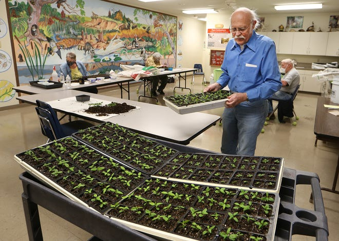 Volunteer James Taylor carries a tray of milkweed plants that have been transplanted in the science room at Dillon Nature Center Friday afternoon, April 2, 2021, which will be sold at the Lesser Known Lovelies Plant Sale.