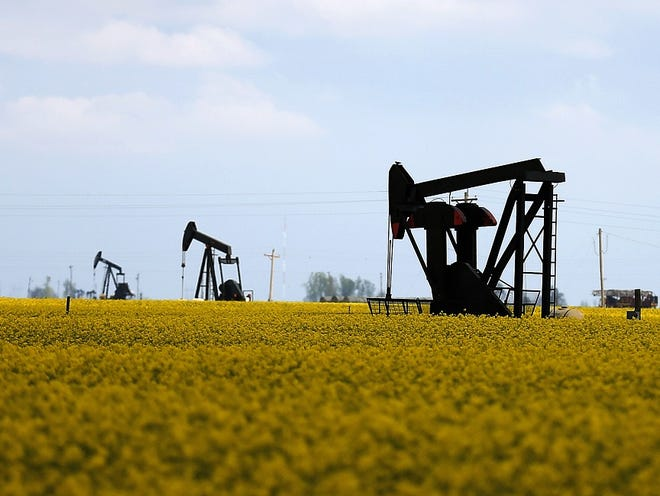 Pumpjacks are scattered across a canola field near Hennessey.