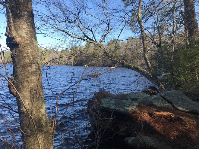 The blue-blazed Pachaug Trail curls down a long slope to the rocky eastern shore of Beach Pond in Exeter.