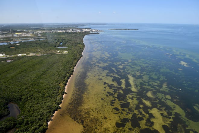 The shoreline along Tampa Bay, just north of Port Manatee and Piney Point.  Millions of gallons of wastewater are being pumped into Tampa Bay at Port Manatee in an effort to avoid a catastrophic failure of a containment wall at Piney Point.