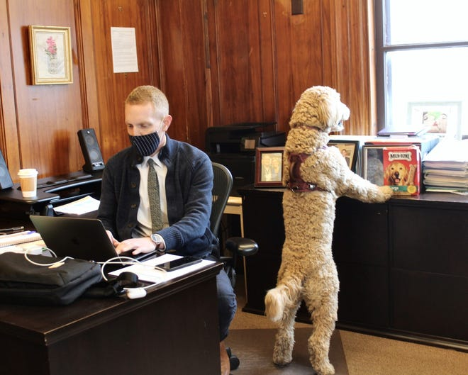 Provincetown Town Manager Alex Morse on his first day on the job in Town Hall, April 5, 2021, with his 8-month-old goldendoodle, Oliver, looking out the window.