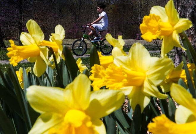 A teenager riders past daffodils at Iroquois Park on a sunny spring afternoon in April 2021.
