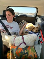 Volunteer Sophie Boccard sits with four Mexican dogs being transported to Arizona for adoption.