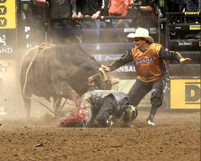 Frank Newsom works to distract a bull from a bull rider on the ground during a professional bull riding event.
