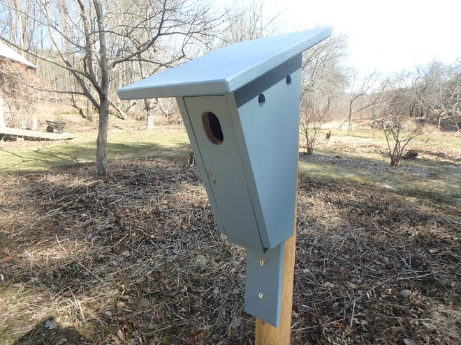 Birdhouses are nice, but we need to do more for our baby birds, including growing native plants.