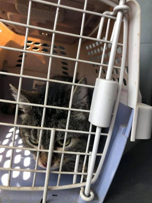 """Batcat,"" who has been rescued from a tree after spending a week in the tree at about 70 feet high, is now safe and sound, but needed some medical help for weakness and dehydration."