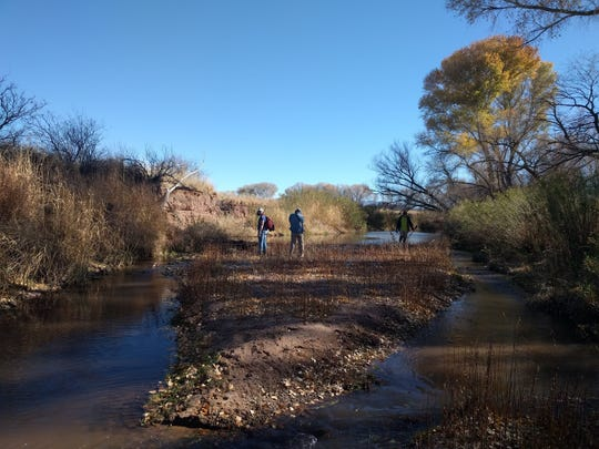 Volunteers carry out a survey searching for signs of beavers along the San Pedro River in December 2020.