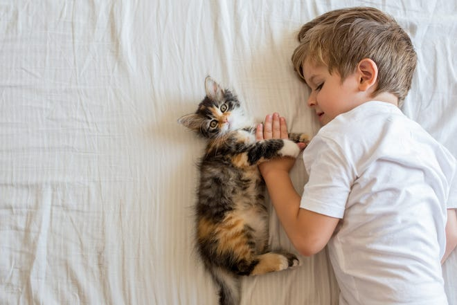 A new study by MU Research Center for Human-Animal Interaction at the MU College of Veterinary Medicine shows that cats might be more beneficial than dogs for children with autism.