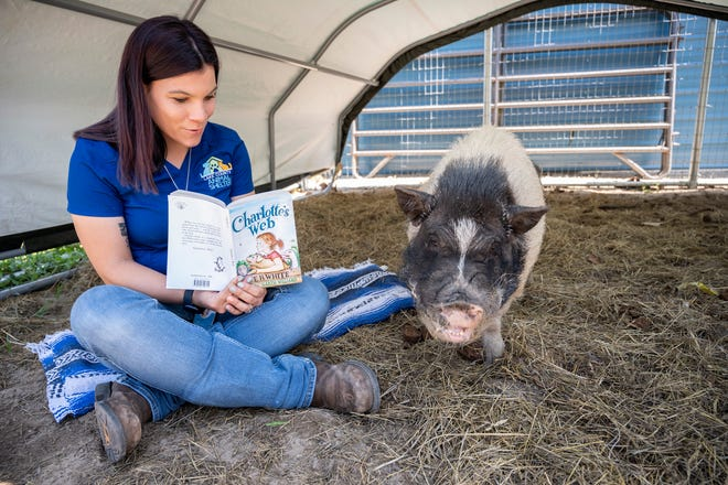 "A worker reads the book of the month, ""Charlotte's Web,"" to a resident pig at the Lake County Animal Shelter on Tuesday. [Cindy Peterson/Correspondent]"