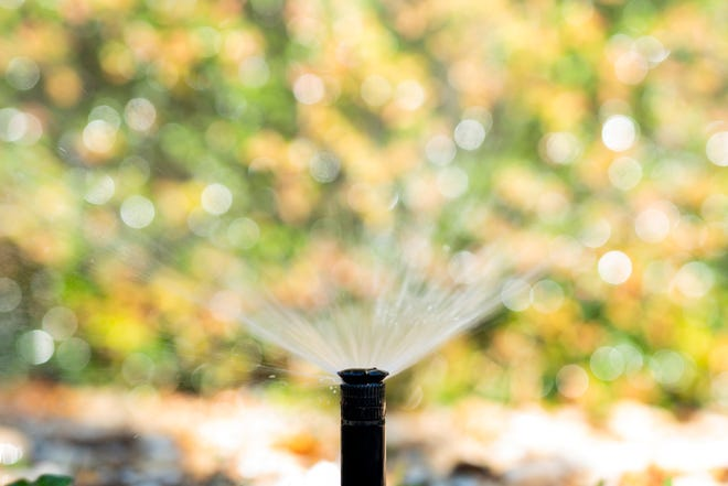 Irrigating at the right amount and the right time can reduce disease problems in your turf.