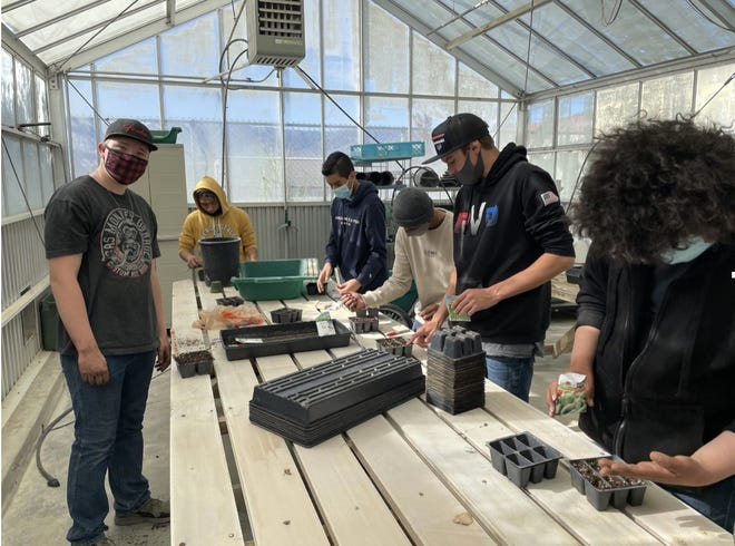 Lucerne Valley Middle High School students plant seeds in a greenhouse on Monday, April 5, 2021, their first day back on campus since the school closed in March 2020 in response to the COVID-19 pandemic.