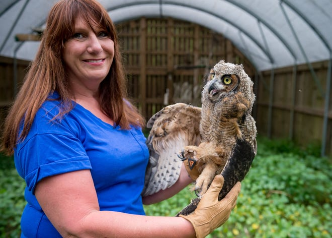 Letitia Labbie is a federally permitted wildlife rehabilitator, one of only about four in Louisiana licensed to handle birds of prey.