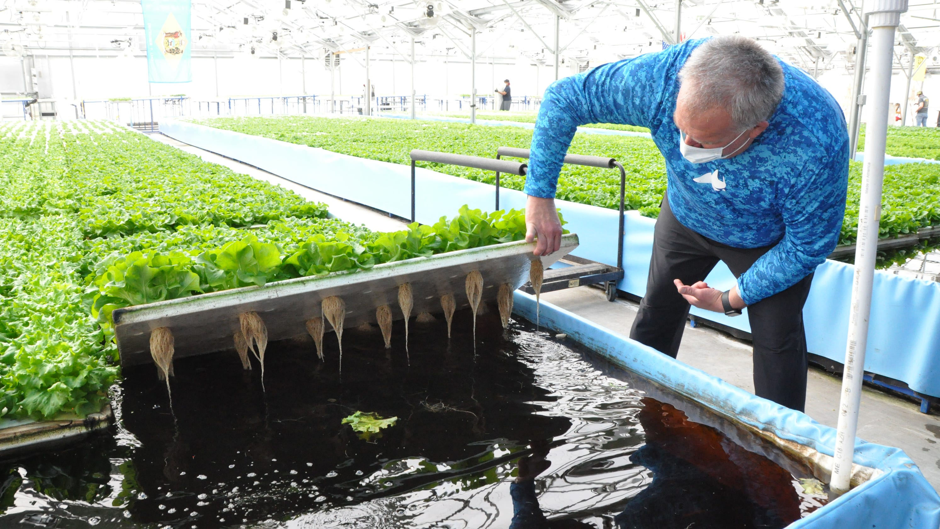 Delaware entrepreneurs start growing crops in water. Will hydroponic farms catch on?