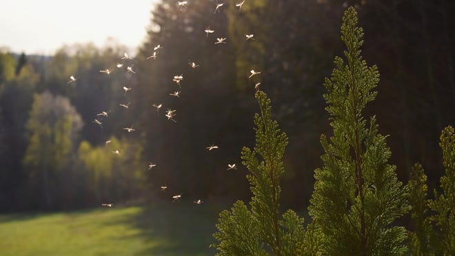 Get at the mosquitoes before they reproduce by targeting the mosquitoes and their larvae.