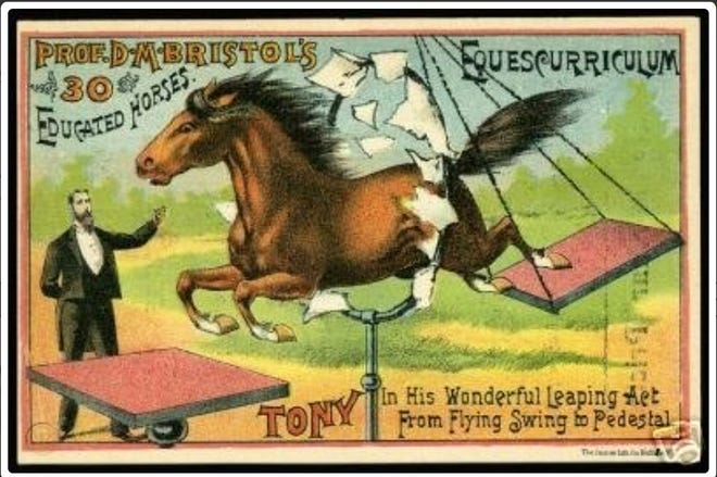 Tony the Horse was able to leap from a swinging platform, onto a stationary platform as part of the act on stage.