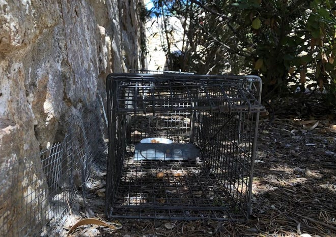 City residents can request a one-week use of a live trap, free of charge, from Las Cruces Animal Control.