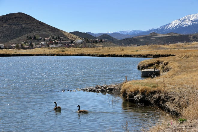 Waterfowl take advantage of the wetlands at the Truckee Meadows Nature Study Area on April 8, 2021. The area used to be the Rosewood Lakes Golf Course.