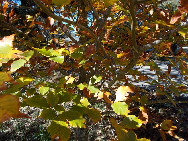 Native trees utilize carbon for photosynthesis and they are very valuable to wildlife.