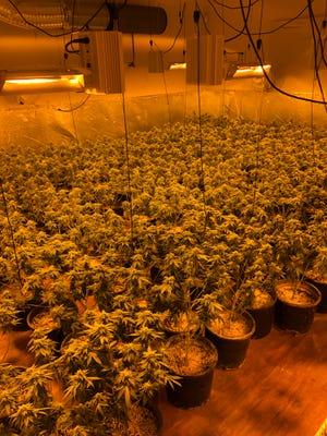 Visalia police discovered 1,700 marijuana plants at a home on Wednesday, April 7, 2021.