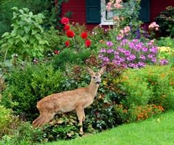 Penn State Extension Master Gardeners invites gardeners to sign up for the annual educational event, Home Gardeners School. Sign up is available for one or more of the listed four online topics. Registration deadline is 9 a.m. April 17.