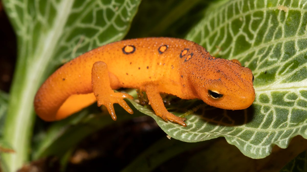 Nature: In a 24-hour period, 18 species of amphibians were documented during a recent search