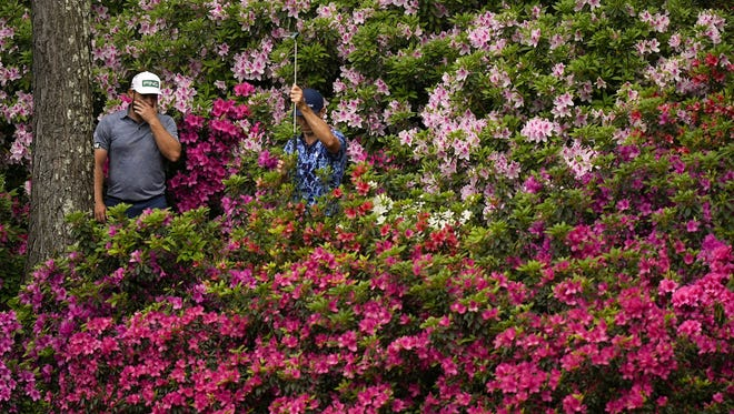 Billy Horschel of Ponte Vedra Beach (right) tries to help Tyrrell Hatton find a lost ball in the Azaleas behind the 13th green of the Augusta National Golf Club on Friday during the second round of the Masters.