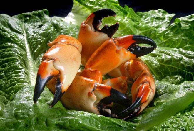 Thursday's dinner will feature stone crab claws.