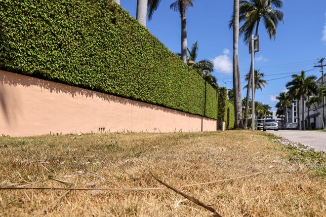 A patch of dry grass on Hibiscus Avenue near Brazilian Avenue on Friday, April 9, 2021.