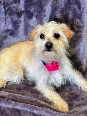 Delightful little Pixie will put a smile on your face!