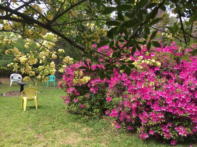 Carter Jewell and Clayton Hamerski have their backyard ready for the 2021 Secret Garden Party. [ALLISON BALLARD/STARNEWS]