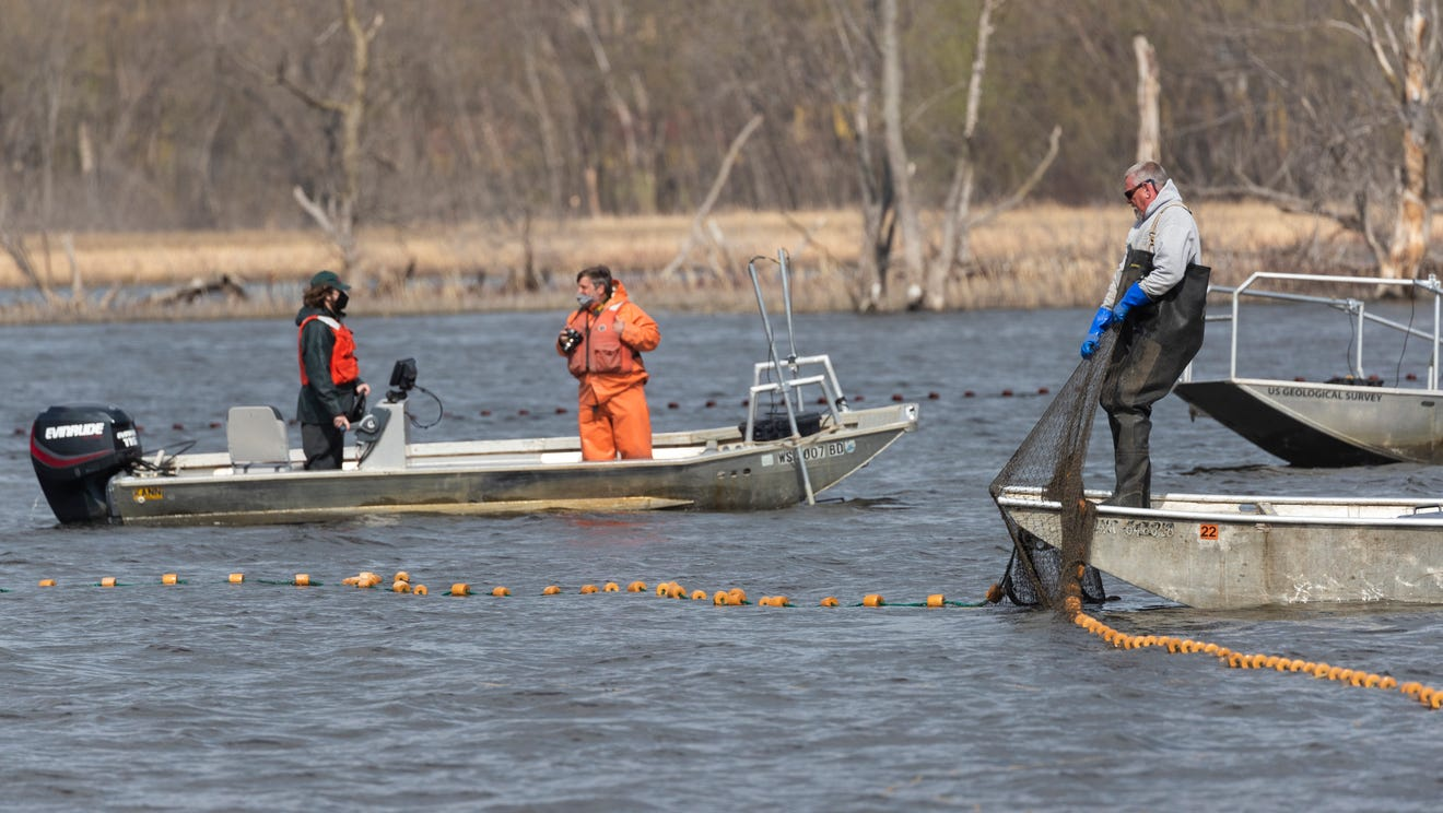 Workers from the Wisconsin DNR, Minnesota DNR, U.S. Fish and Wildlife Service and the U.S Geological Survey