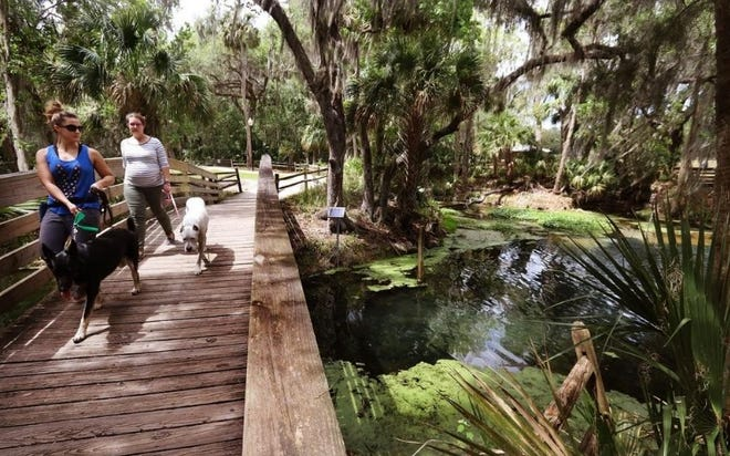 Women walk their dogs on one of the boardwalks over Gemini Springs in DeBary. The state determined that urban turfgrass fertilizers and septic tanks have contributed too much nitrogen to the spring.