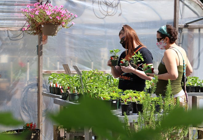 UF Ph.D. students Michelle Eliasson, left, 28, and Leigh Kassem, 41, right, look at plants at Grow Hub on Saturday. They came to celebrate Eliasson passing qualifying exams and becoming a sociology Ph.D. candidate.