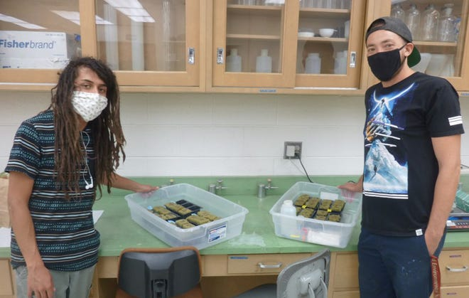 NMSU student Skyler Stinson and NMSU graduate assistant Jason French work together in a campus lab, where students grew hemp cultivars last fall.