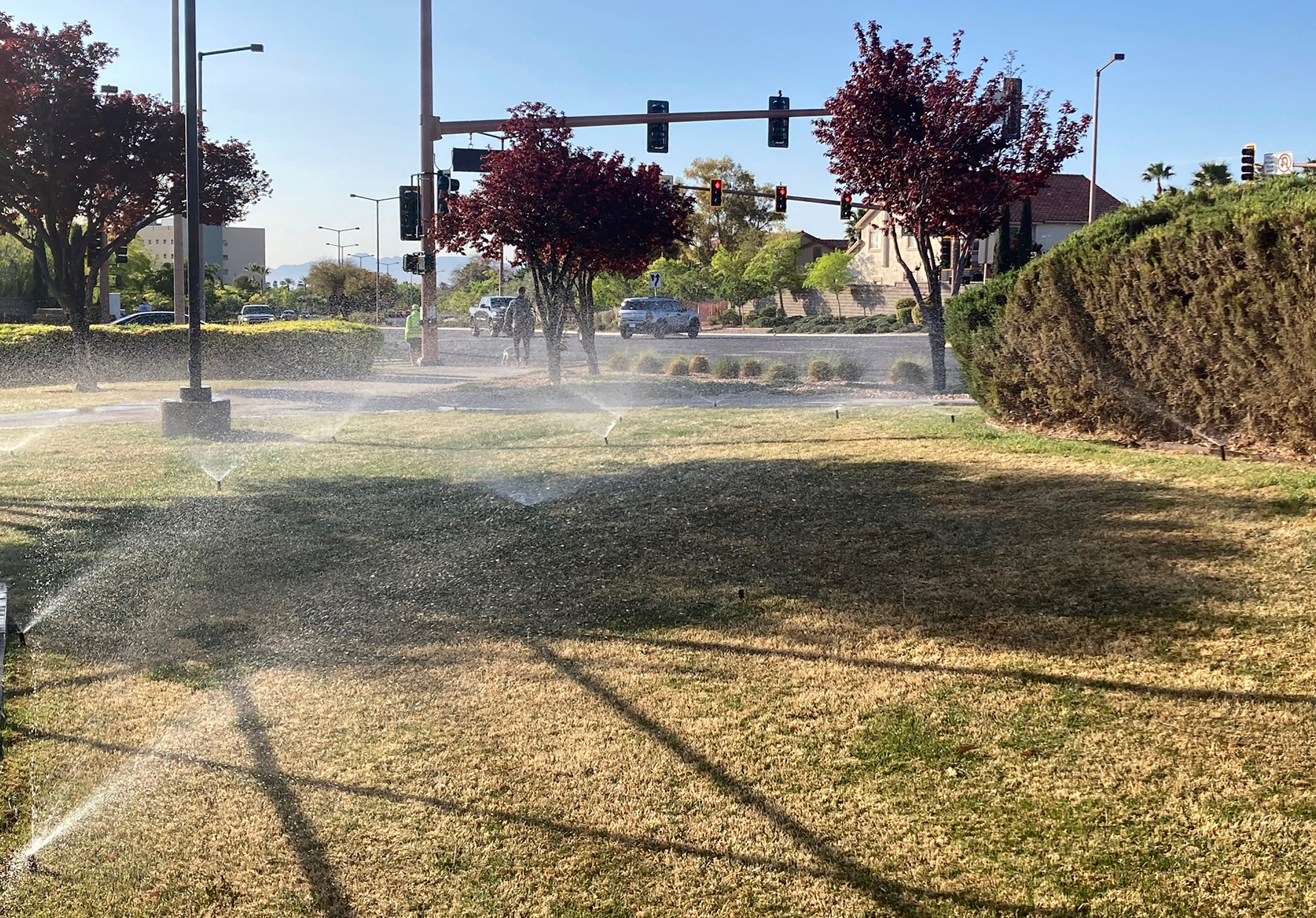 Las Vegas pushes to become first to ban ornamental grass in water conservation move 2