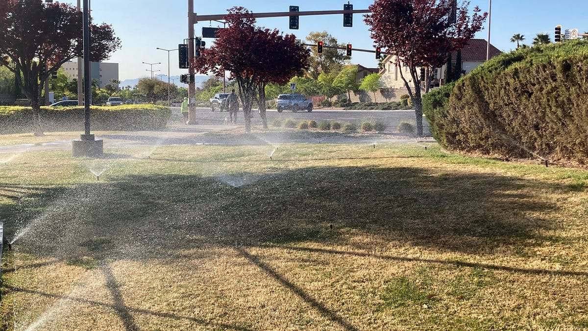 Las Vegas pushes to become first to ban ornamental grass in water conservation move 3