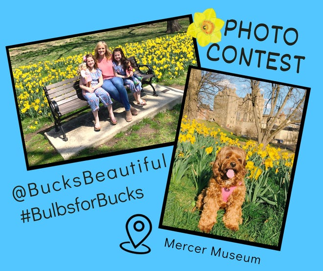 Bucks Beautiful'ssecond annual Bulbs for Bucks daffodil photocontestisopenfor participants to share photosfromofsome of theplanting sites where a total of1.5 million bulbshave been planted since 2010throughout Bucks County.Entry submissionswill beaccepteduntil midnight April 30.